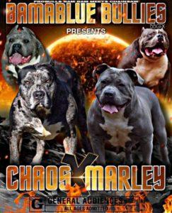 Chaos X Marley