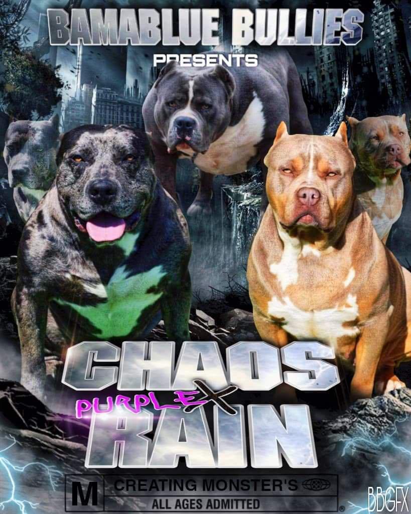 Chaos X Purple Rain